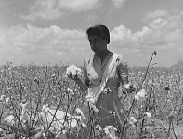 Image: Photo of girl harvesting cotton crop by Howard R. Hollem, 1942. From the Library of Congress.